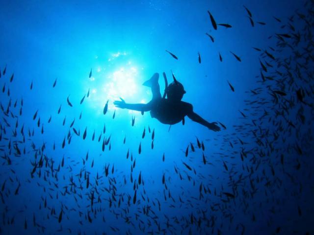 Free diving sardinia